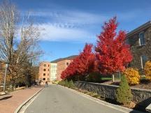 Walker College of Business